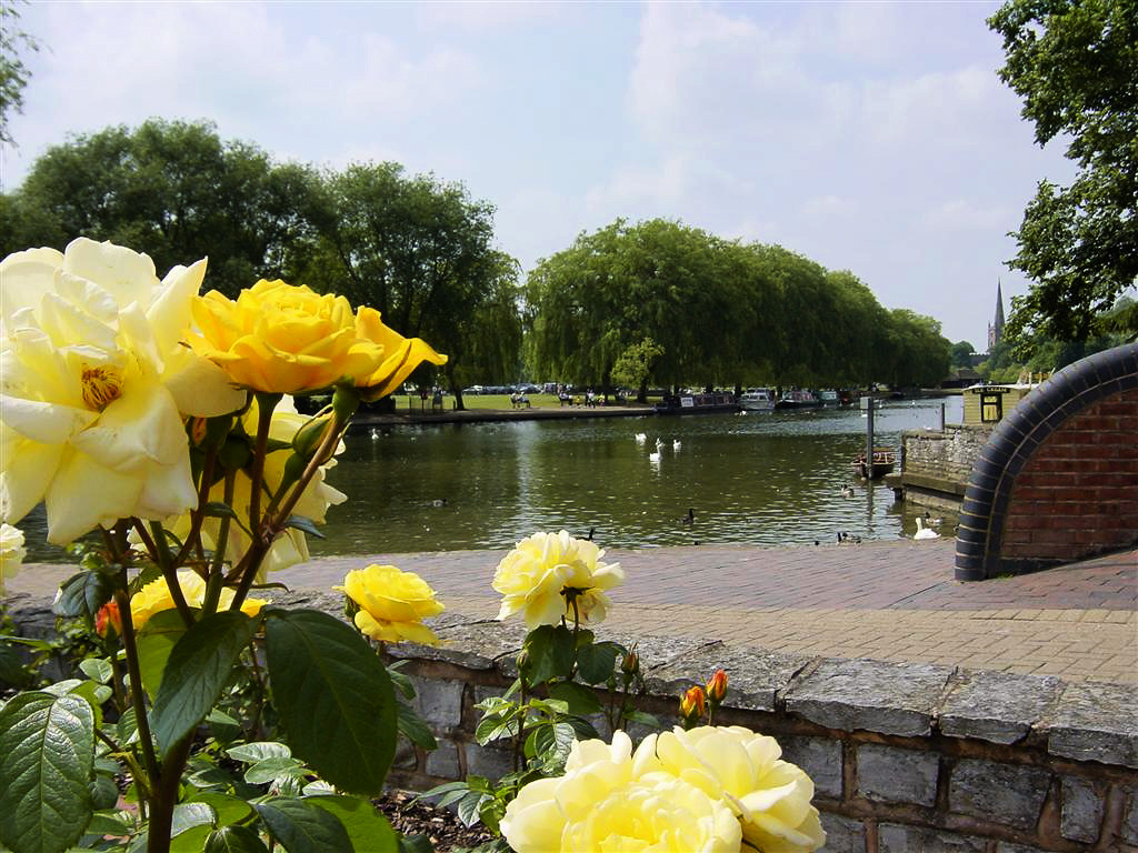 Yellow Roses and River Avon