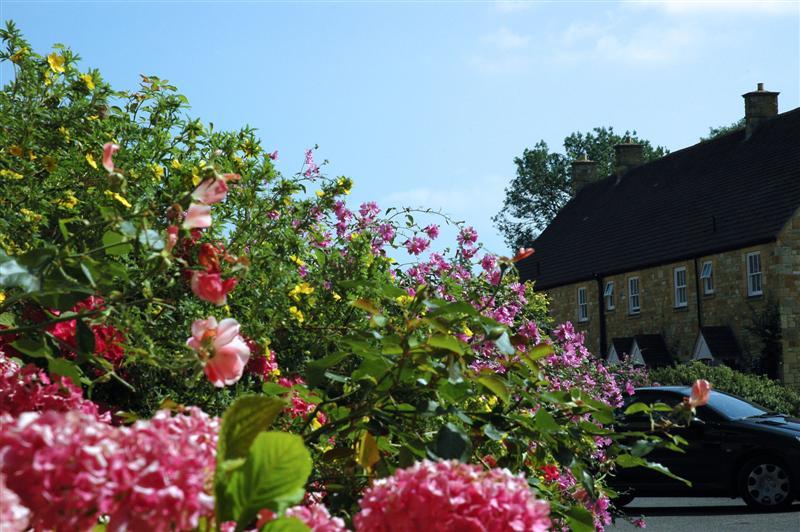 Chipping Campden - flowers