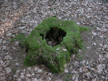 moss-covered-stump-1