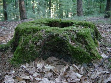 moss-covered-stump-2