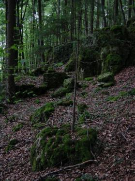 small-tree-from-mossy-rock-1
