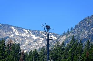Tahoe eagle nests (from boat - slightly blurry) 01