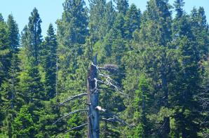 Tahoe eagle nests (from boat - slightly blurry) 03