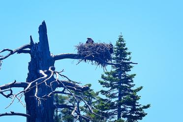 Tahoe eagle nests (from boat - slightly blurry) 07