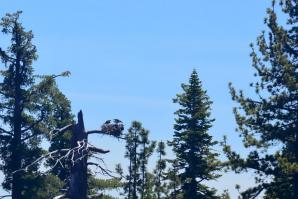 Tahoe eagle nests (from boat - slightly blurry) 08