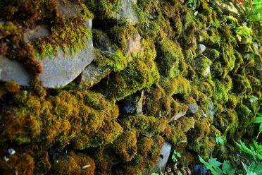 Boeger Winery - mossy stone wall 01