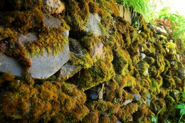 Boeger Winery - mossy stone wall 02