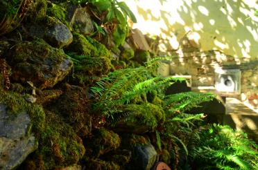 Boeger Winery - mossy stone wall 03