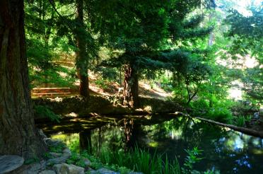 Boeger Winery - redwood pond 01