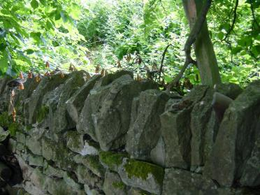 Cotswold dry-stone wall