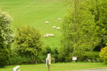 Sheep at the bottom of the hill